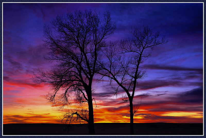 Sunset Tree by Patrick Stone