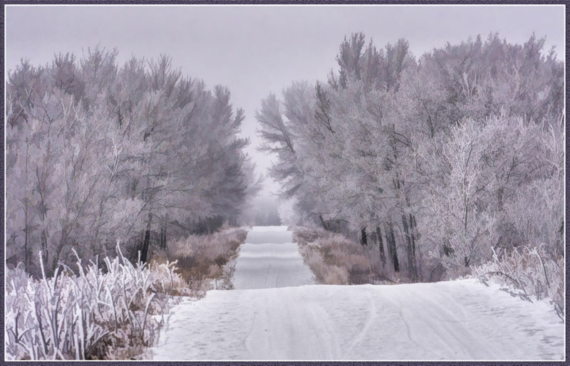 Frosty Road by Pat