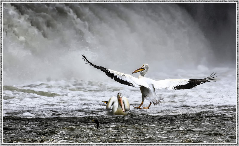 Dramatic Landing by Marlene Smith